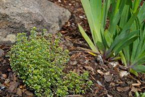 Briar Rock Garden - 188