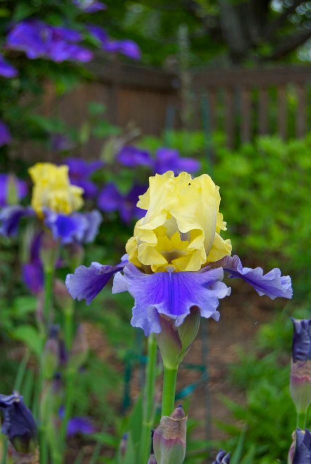 Briar Rock Garden - 235
