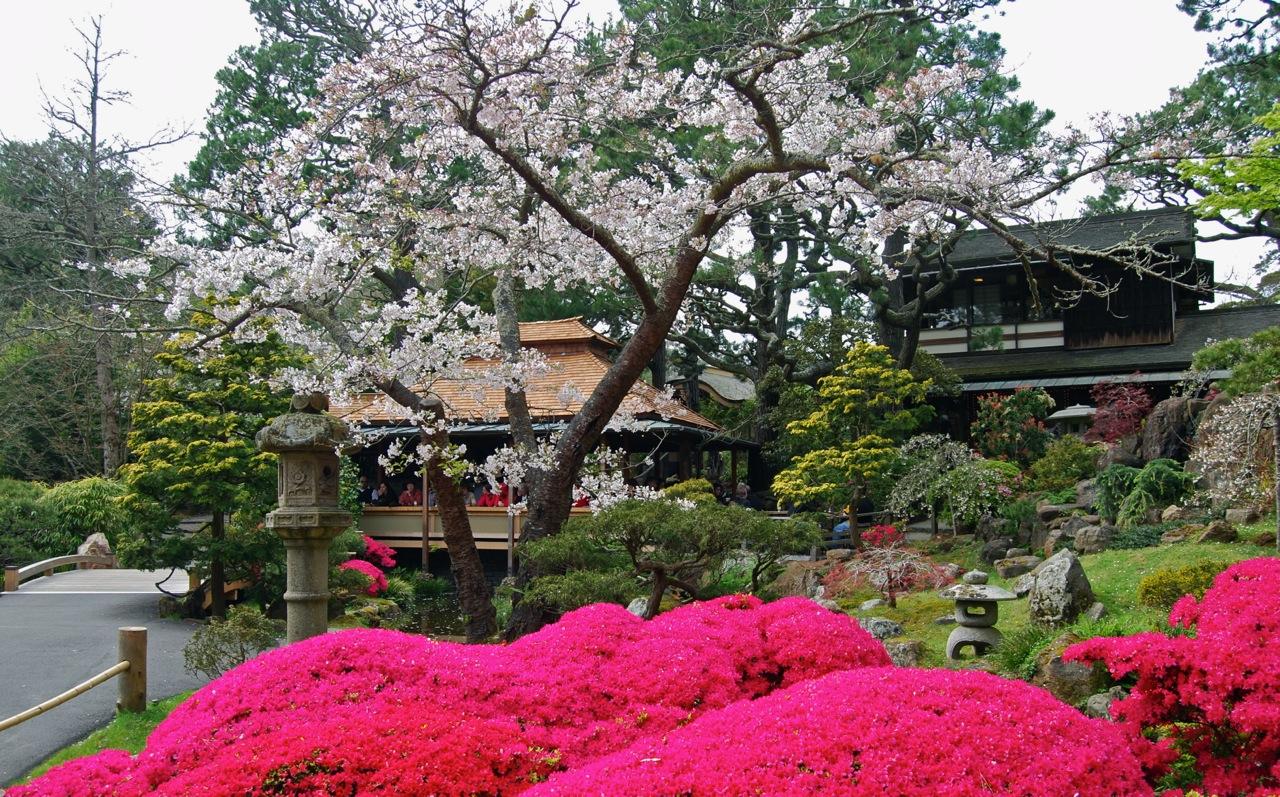 Japanese Tea Garden San Francisco Igardendaily