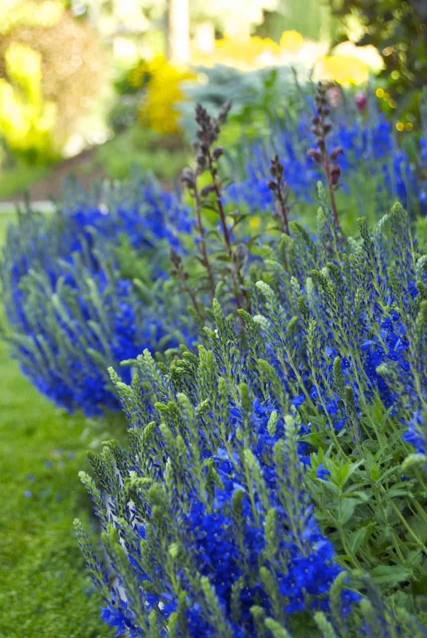 Garden Favorites In Early June Igardendaily