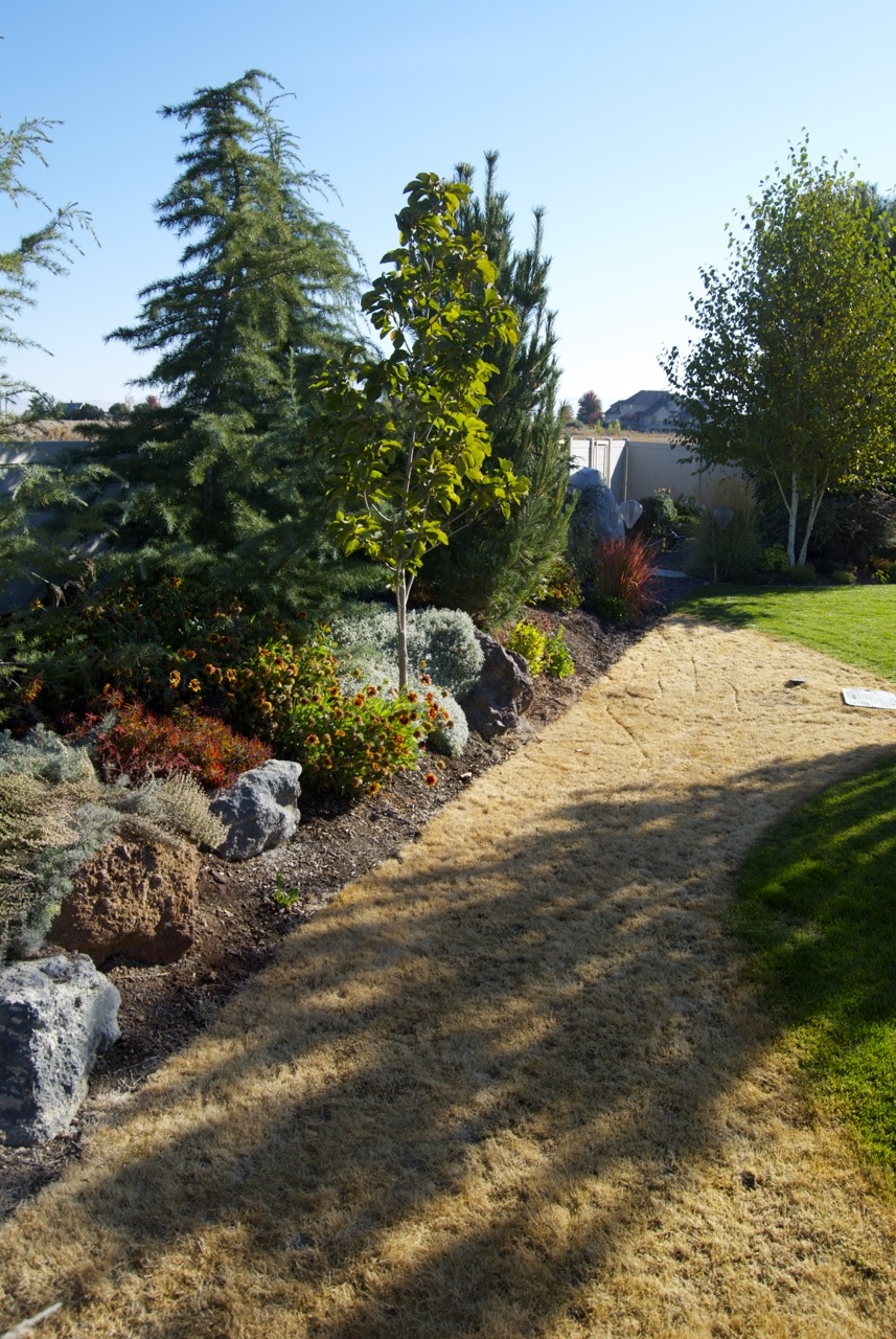 really big rocks we are ready to give this backyard berm a new look
