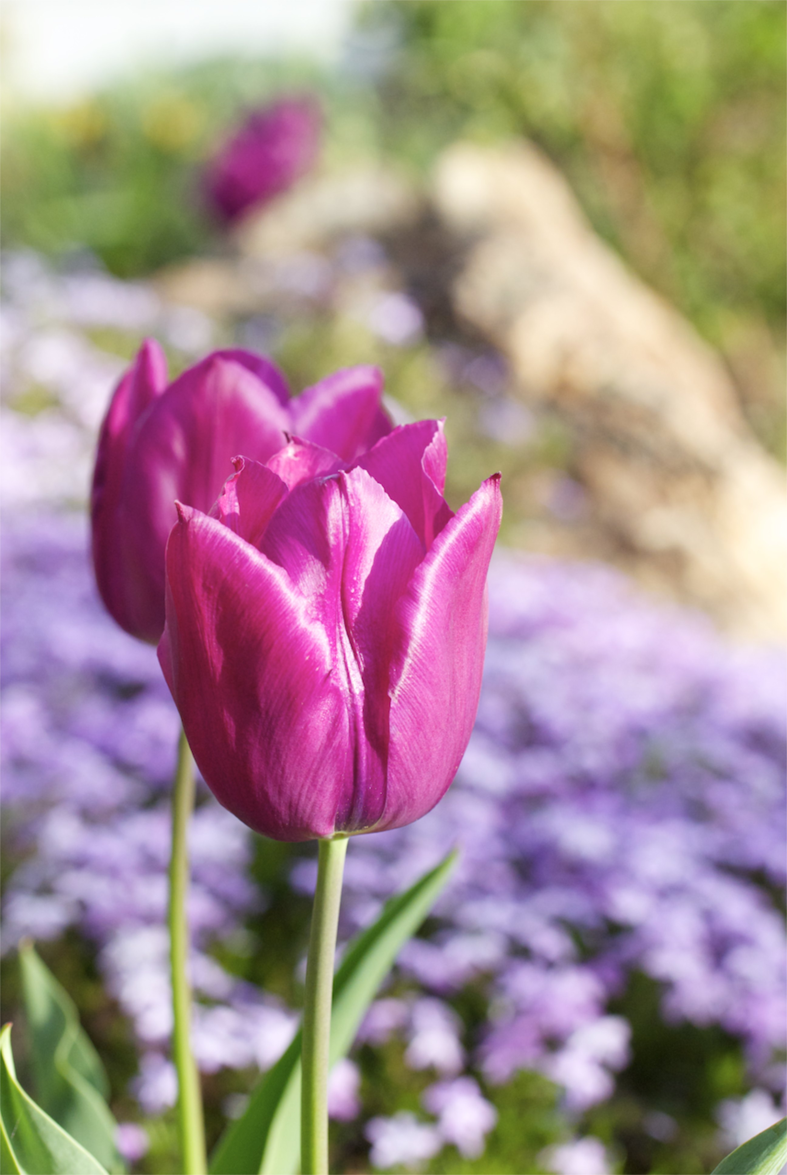 Above Average Spring Brings Beautiful Blooms To Boise Igardendaily