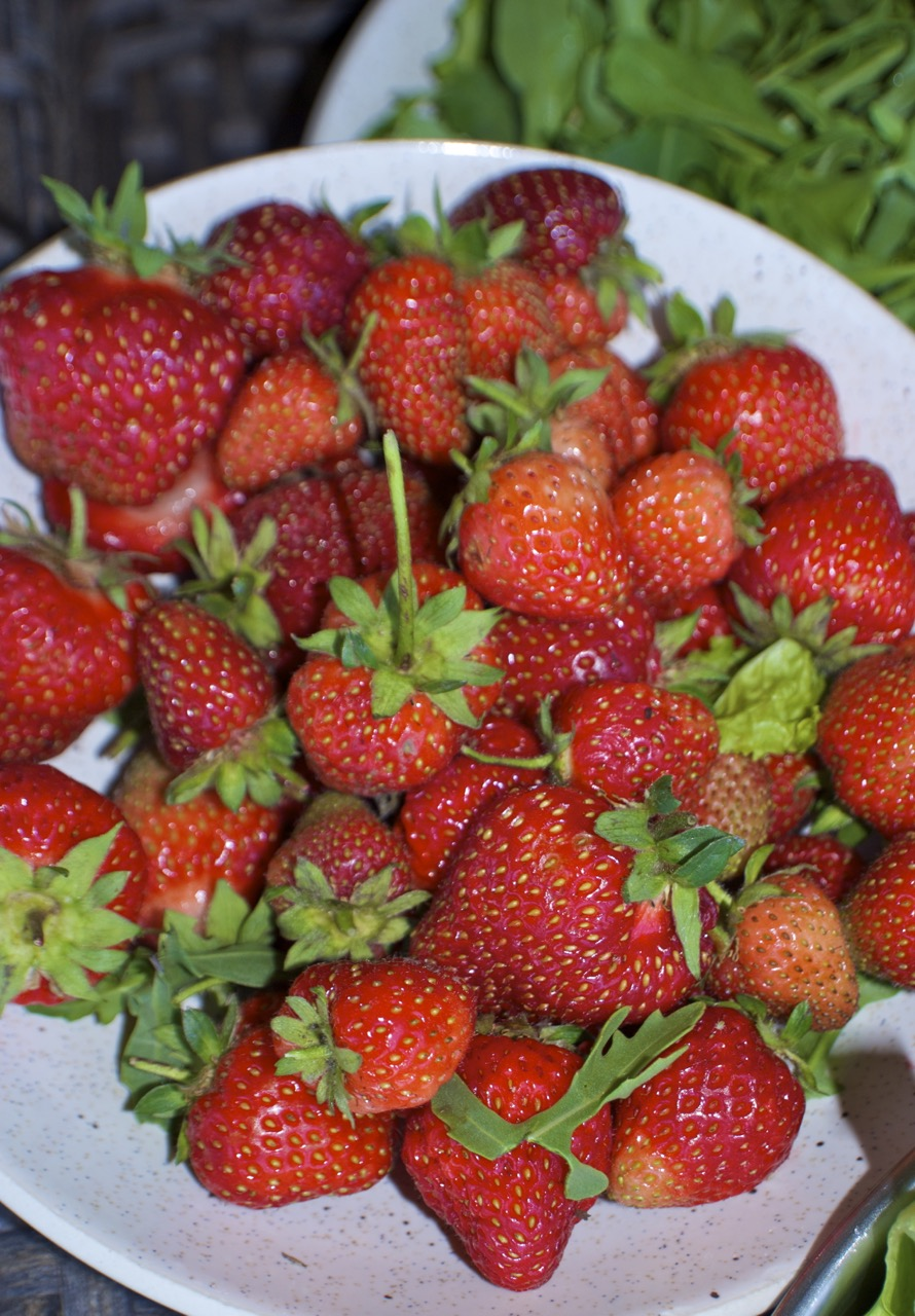 Step into spring with strawberries a growing guide for the intermountain west igardendaily - Plant strawberries spring ...